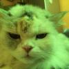 Аватар пользователя rainbow78