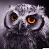 Аватар пользователя redmouseWOW