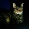 Аватар пользователя kim21rus