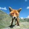 Аватар пользователя LinaGa