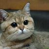 Аватар пользователя IPhonecat