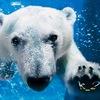 Аватар пользователя kolyan222