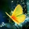 Аватар пользователя Farf4lla