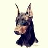 Аватар пользователя Doberman1