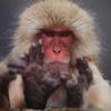 Аватар пользователя macaca