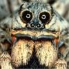 Аватар пользователя Super4el