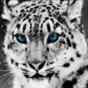 Аватар пользователя Timskiy