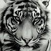 Аватар пользователя Afrik3844