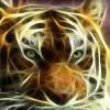 Аватар пользователя Hbaf