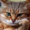 Аватар пользователя frauwolfin89