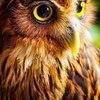 Аватар пользователя RqzqyLis