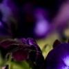 Аватар пользователя Violetcoffee