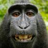 Аватар пользователя Gadzh