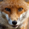 Аватар пользователя Velox