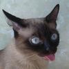 Аватар пользователя dashiftman