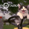 Аватар пользователя KOTHAKATKE