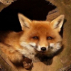 Аватар пользователя PukaPika