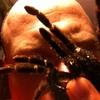 Аватар пользователя tarantulas