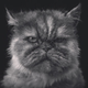 Аватар пользователя NetNarco