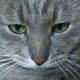 Аватар пользователя VechnayaNevesta