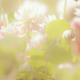 Аватар пользователя smyriacru