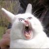 Аватар пользователя fatcat9