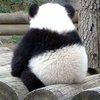 Аватар пользователя Pandatery