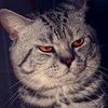 Аватар пользователя gagariny