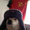 Аватар пользователя YellowLorry