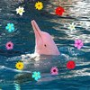Аватар пользователя PinkDolphin