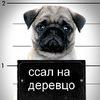 Аватар пользователя Exeller