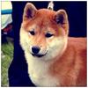 Аватар пользователя Hatsukoi