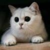 Аватар пользователя sQua1o