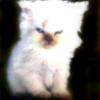 Аватар пользователя SamJay