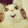 Аватар пользователя tiger15