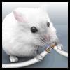 Аватар пользователя Mo3rlonely