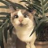 Аватар пользователя Coolstory14