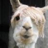 Аватар пользователя lirzman