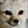 Аватар пользователя cryss1ut