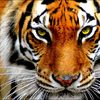 Аватар пользователя Renik2000