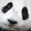 Аватар пользователя Ba3a