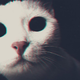 Аватар пользователя xNovikusx