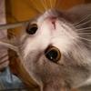 Аватар пользователя VikaM94