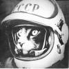 Аватар пользователя Bravecat