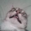 Аватар пользователя basevich1