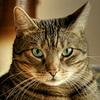 Аватар пользователя CooperPro
