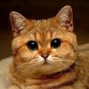 Аватар пользователя merody