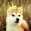 Аватар пользователя shanaro