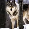 Аватар пользователя greywolf88