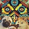 Аватар пользователя Mihhal4